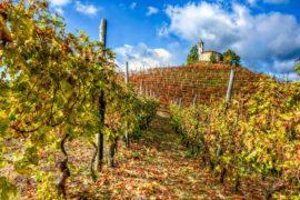 I grandi vini e unesco 2014