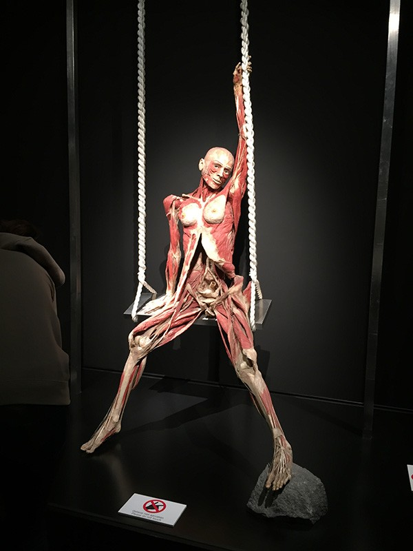 Body World's