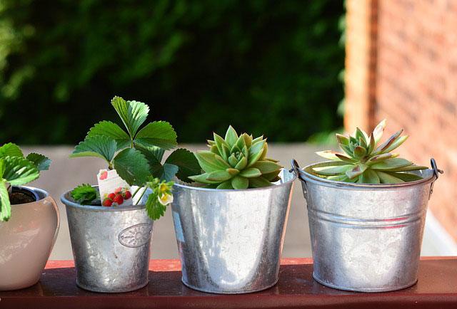 balcony-plants- idee